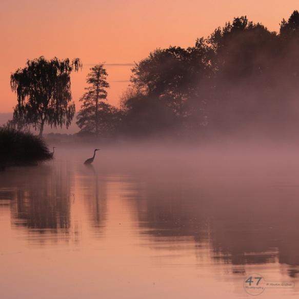 Herons in the mist