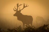 Waiting in the mist