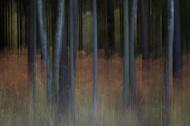 Dark Woods #1