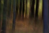 Dark Woods #2