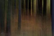 Dark Woods #3