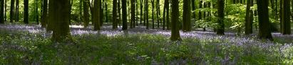 Micheldever Wood