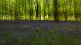 Itchen Wood
