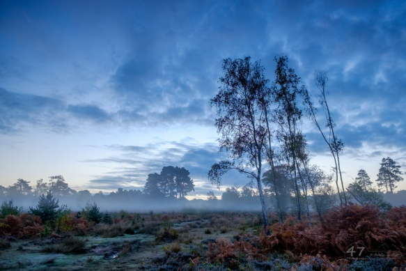 Predawn Mist on Wisley Common