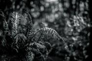 Rain-forest Ferns