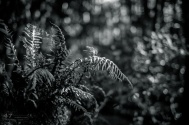 Rain-forest Ferns