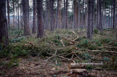 Esher Common after tree felling