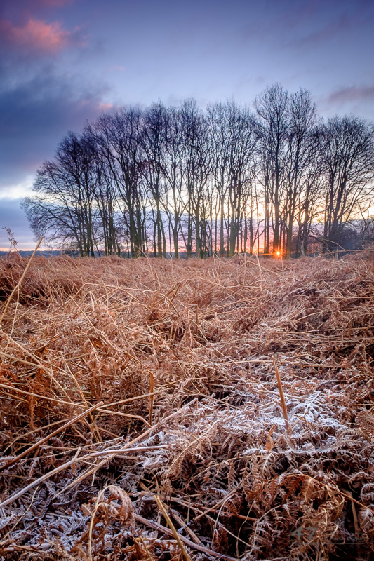 Copse Sunrise