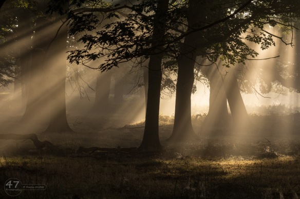 Misty Woods in Richmond Park