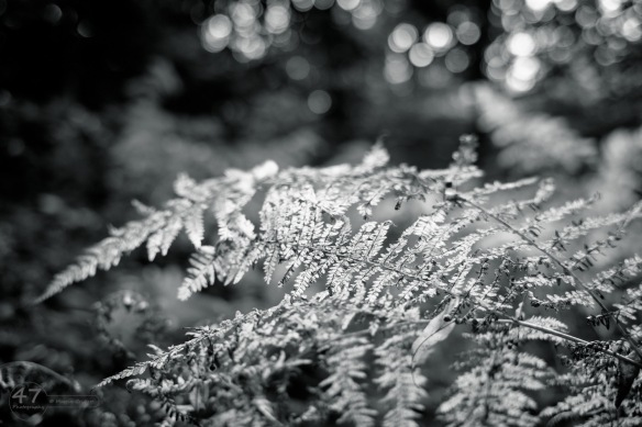 Ferns in mono