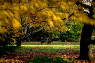 A blend of three images, showing blur where the wind moved the leaves.
