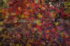 A blend of two images, one in focus of the trees and one out of focus leaves on the ground (in-camera).