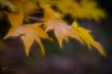 A blend of two images, one in focus and one out of focus.